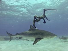 Riffe camouflage wetsuit, free diving with a tiger shark :)