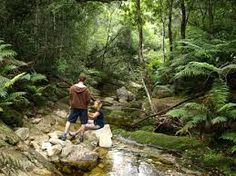 Image result for knysna forest