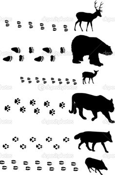 bear footprints template - wolf footprint stencil actual size google search