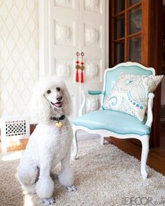 Interior Design with Pups in Mind   A Design Lifestyle - Jacqueline Palmer