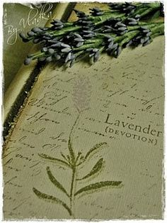 """According to The Language of Flowers which was adopted during the Victorian era, Lavender means """"Devotion"""""""