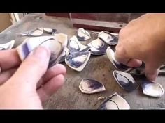 Learn how to Cut Quahog Shell & Create beautiful Jewelry! Follow the Video. The Indians used the shells for Currency to buy Tobacco, Liquor and more! Rock tu...