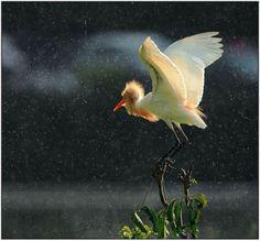 Most Beautiful Rain Photos | Golberz.Com