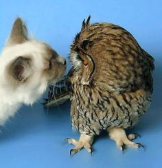 The owl and the pussy cat.