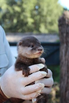 Otter Pups Venturing out with Their Fam