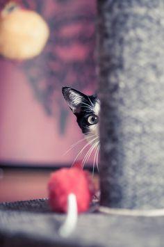 Find the cat #4 / Marilia Pedroso
