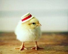 #birds #cute #hats #featheredfriends