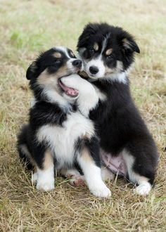 "[Razzle & Buzz - Border Collies] ** "" WUTYA THINK YER GONNA FINDS IN DER? YESTERDAYS TURKEY BONE?"""