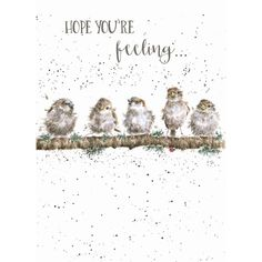 Greeting Cards :: Occasions :: View All > - Greetings Cards Birthday Greetings, Birthday Wishes, Birthday Cards, Wrendale Designs, Kids Room Paint, Funny Birds, Watercolor Animals, Watercolor Cards, Watercolour