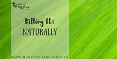 Killing It; - Burst of happyness Pest Control, Diwali, Work On Yourself, Sayings, Nature, Naturaleza, Lyrics, Nature Illustration, Off Grid