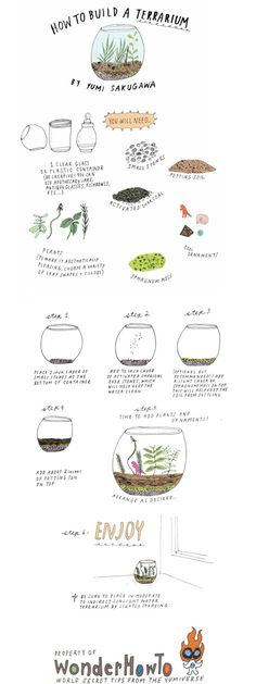 How to Build a Terranium.   Yumi Sakugawa