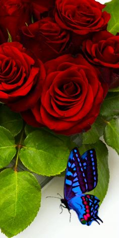 Beautiful Butterflies, Beautiful Roses, Flowers Gif, Butterfly Effect, Calming Colors, Good Morning Friends, Jennifer Love Hewitt, Nature Photography, Gifs