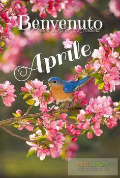 Ahhh >> Little Birds Movie Online Pretty Birds, Love Birds, Beautiful Birds, Animals Beautiful, Cute Animals, Pretty Flowers, Funny Bird, Bluebirds, Tier Fotos