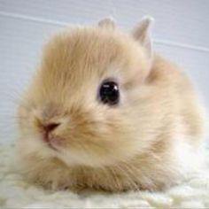 Bunnies !