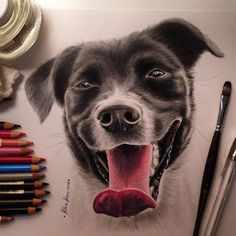 Great dog drawing ♥ - →By @silvia_lion ← ▪ Hashtag #creativempire Check @rtistic_feature :) -
