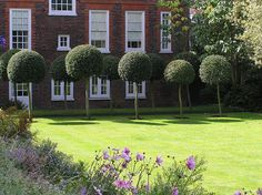 the hollyhock walk Dream English, English House, Sunken Garden, Walled Garden, Fenton House, Hampstead London, Formal Gardens, Hollyhock, North London