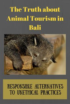 The issues facing animals in Bali and responsible choices you can make to help shift away from unethical animal encounters. #responsibletravel #animalwelfare