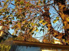 Colors from a hot Fall by Italia Multimedia and Laboratori Creativi Beretta.