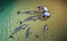 dolphin-feeding