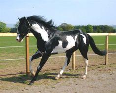 paint horse... pretty !!