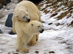 17 Of The Warmest, Sweetest Bear Hugs
