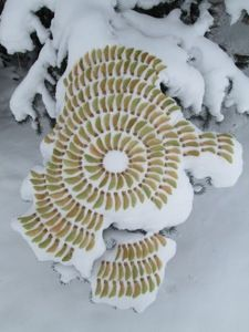 """Winter Wings"", by Tim Pugh."