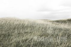 ON THE HILL OF TARA  Fine Art Photographic Print via Hedgerow+Stone. Click on the image to see more!