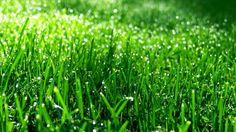 ik heb gras bij me dierentuin geplaatst omdat het in de natuur is en daar hoort gras.