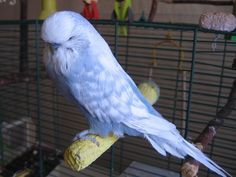 Grey Opaline Spangle - the photo makes it look blue though!