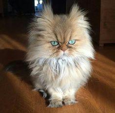 I am not amused