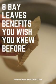 Bay leaves aka laurel leaves are used widely to repel pests like cockroaches and mise, but they actually serve more purposes than just sending off pests bay leaves benefits Laurel Leaves, Bay Leaves, Health Heal, Health Diet, Bay Leaf Tea Benefits, Bay Leaf Plant, Heal Wounds Faster, Spring Soups, Healthy Tips