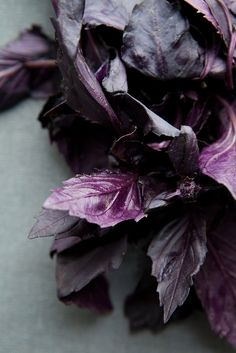 kimberley hasselbrink photography/ kimberleyhasselbrink.com via theyearinfood.com - color studies: the purples of winter (a new feature) - opal basil