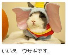 ぼくミッキー! | A!@attrip    (via http://attrip.jp/63136 )