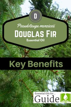 Douglas Fir #essenti