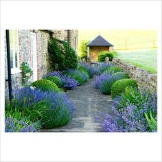 Path running between house and surrounding fields is softened by clumps of Lavandula - Lavender, Nepeta - Catmint and Irises and clipped Box balls. Private garden, Dorset, UK: Photographer: Carole Drake The colors and the repetition are so soothing Boxwood Garden, Gravel Garden, Garden Paths, Herb Garden, Back Gardens, Small Gardens, Outdoor Gardens, Landscape Design, Garden Design