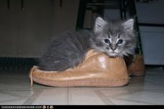 This shoe is not my size…