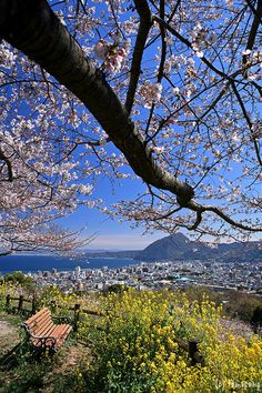 Beppu-city, Oita, Japan