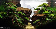 Very calm scape ------------------------------------------------ #aquascape #aquarium #aqua #aquascaping #wood #grass #tetra #fish #fishtank #tropical #tropicalfish #nature #scenery #water #fresh #aquariumsofinstagram #aquaria #beautiful #awesome #plants #aquariums #instafish #naturalaquariums #beautiful #aquariumsdaily