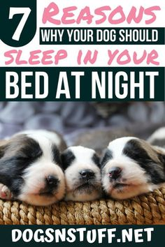 Here are the top benefits of letting your dog sleep with you in the night! Wild Animals Pictures, Funny Dog Pictures, Funny Dogs, Cute Dogs, Pet Fox, Dog Rules, Dog Hacks, Sleeping Dogs, Pet Life
