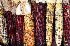 El Maíz Mexicano, 20 Años Después Mexican Corn, 20 Years Later.