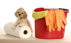 Tips For Cleaning Up Messes From Fellow Pet Parents | Dog Lovers Today
