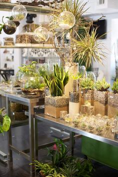 I love the way these succulents are arranged - a sand layer, then stones, in a clear glass vessel. Might have to steal this! Would be nice for bamboo as well.
