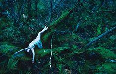 Forest photoshoot-inspiration