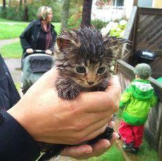 Small Hand-Held Kittens