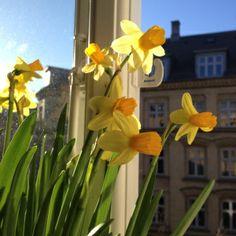Copenhagen Spring Bike Details, Dahl, Copenhagen, Shapes, World, Spring, Pretty, Plants, Photography