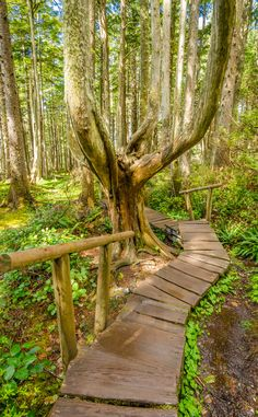 Cape Flattery Trail   Travel   Vacation Ideas   Road Trip   Places to Visit   Neah Bay   WA   Hiking Area