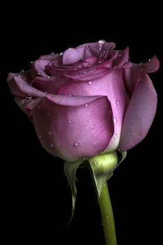 Para mi querida hermana Rosita epd 11/11/16 de  jordi.