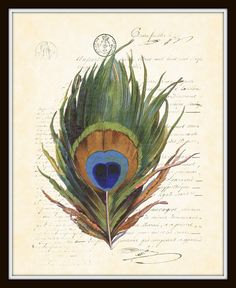 Antique French Peacock Feather Collage on French Ephemera Art Print 8 x 10 Home Decor. $10.00, via Etsy.