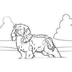 Kleurplaat Cavalier King Charles Spaniel 1000 Images About Adult Coloring On Pinterest Laurel