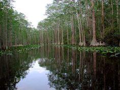 georgialandforms2008 / Okefenokee Swamp
